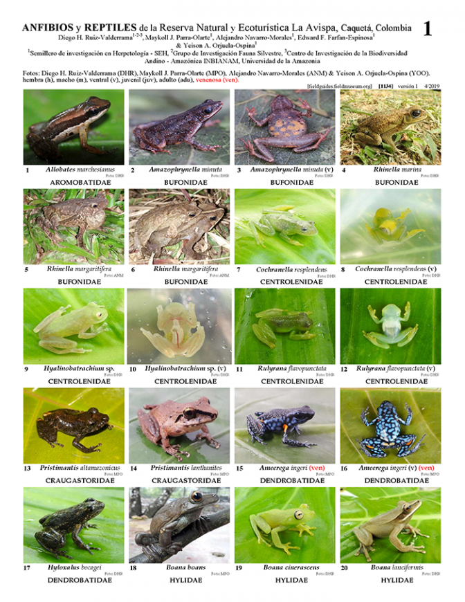 1134_colombia_amphibians_and_reptiles_la_avispa_natural_reserve.pdf