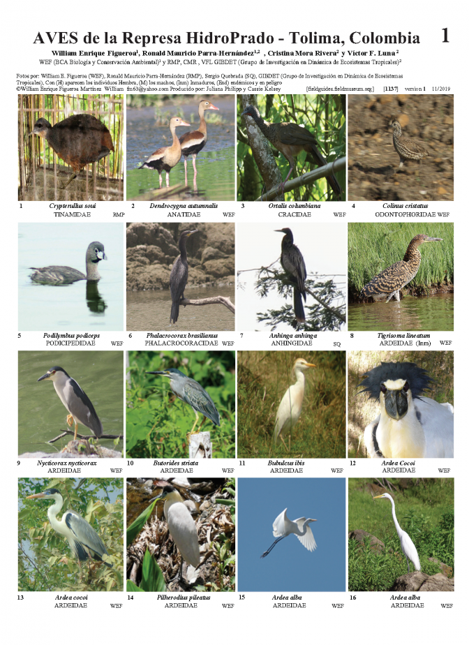 1137_colombia_birds_of_hidroprado.pdf