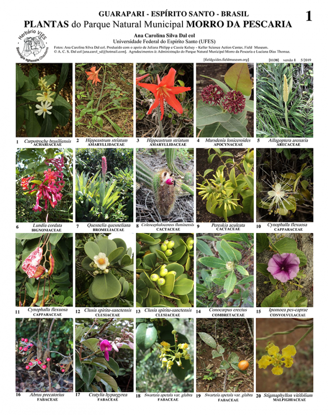 1138_brazil_plants_of_morro_da_pescaria.pdf
