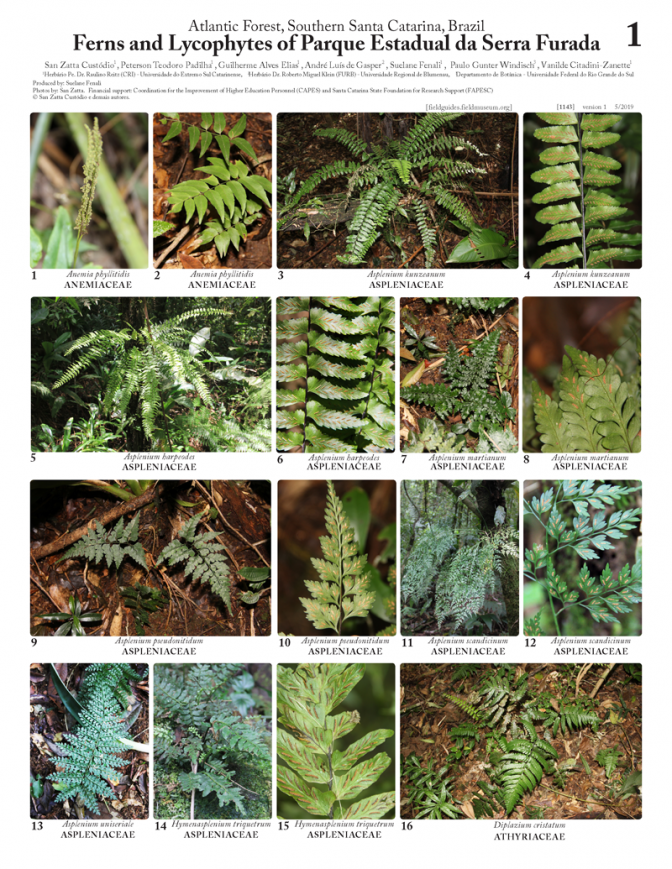 1143_brazil_ferns_and_lycophytes_of_serra_furada_state_park.pdf
