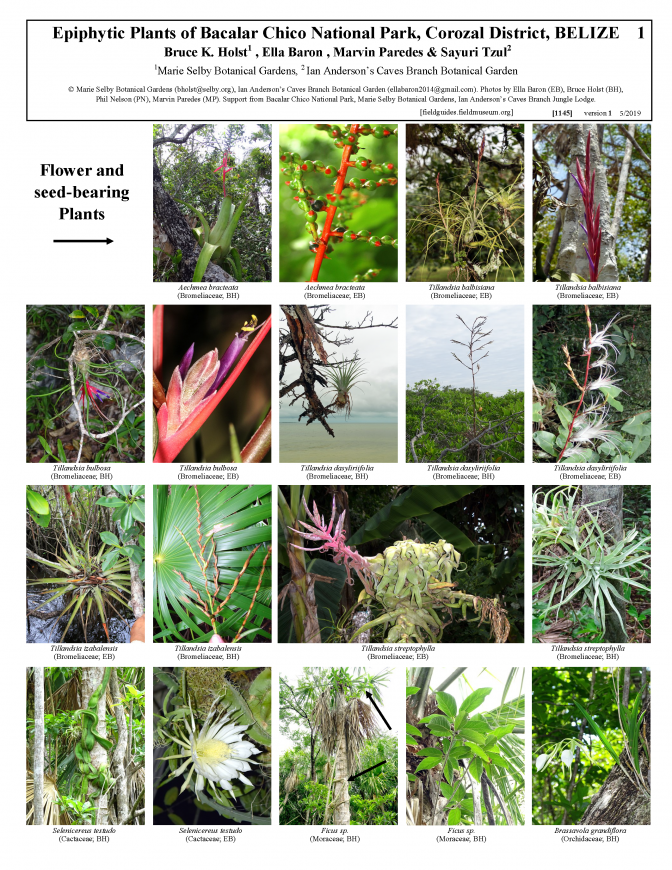 1145_belize_epiphytic_plants_of_bacalar_chico_national_park.pdf