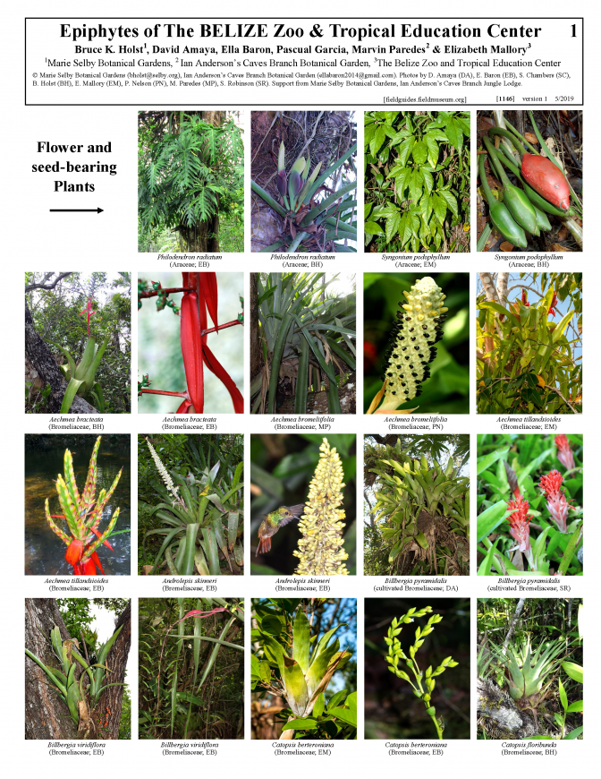 1146_belize_epiphytes_of_the_belize_zoo.pdf