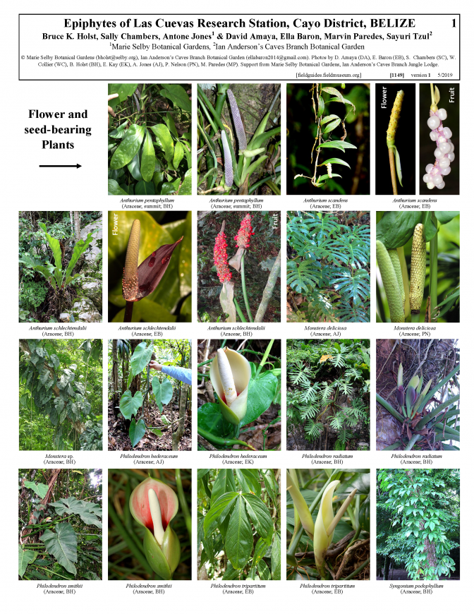 1149_belize_epiphytes_of_las_cuevas_research_station.pdf