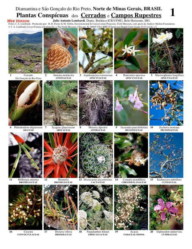 Minas Gerais -- Conspicuous Plants of the Cerrados and Campos Rupestres
