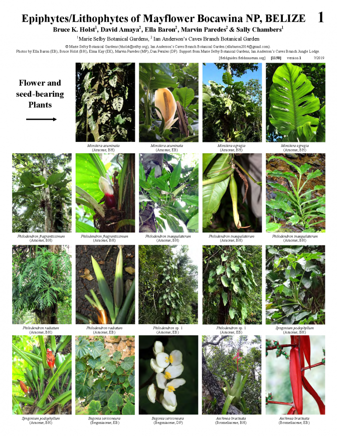 1150_belize_epiphytes_and_lithophytes_of_mayflower_bocawina_national_park.pdf