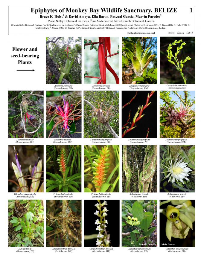 1151_belize_epiphytes_of_monkey_bay_wildlife_sanctuary.pdf