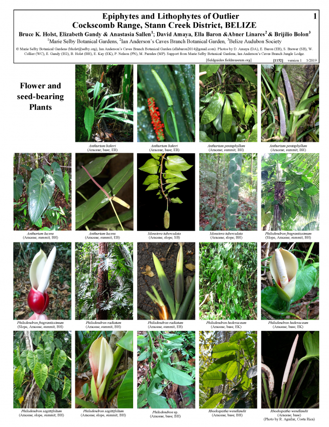 1152_belize_epiphytes_and_lithophytes_of_outlier.pdf