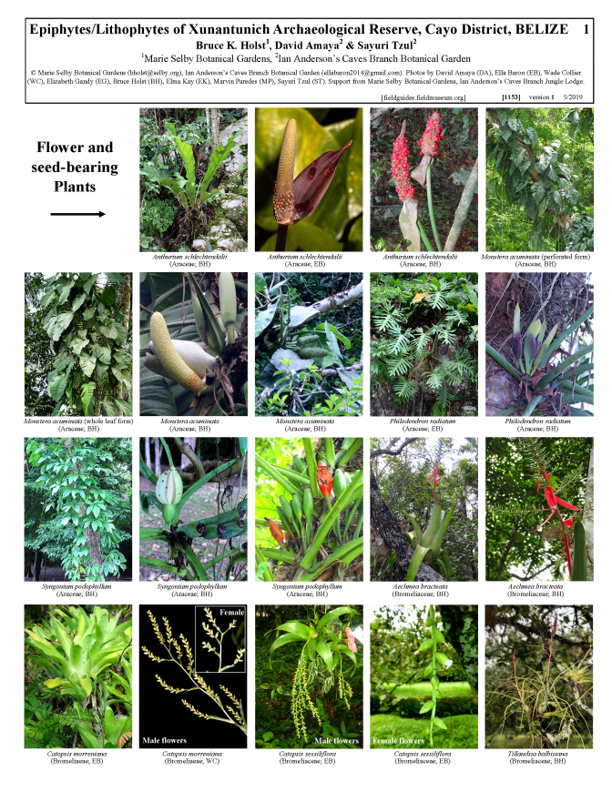 1153_belize_epiphytes_and_lithophytes_of_xunantunich_reserve.pdf