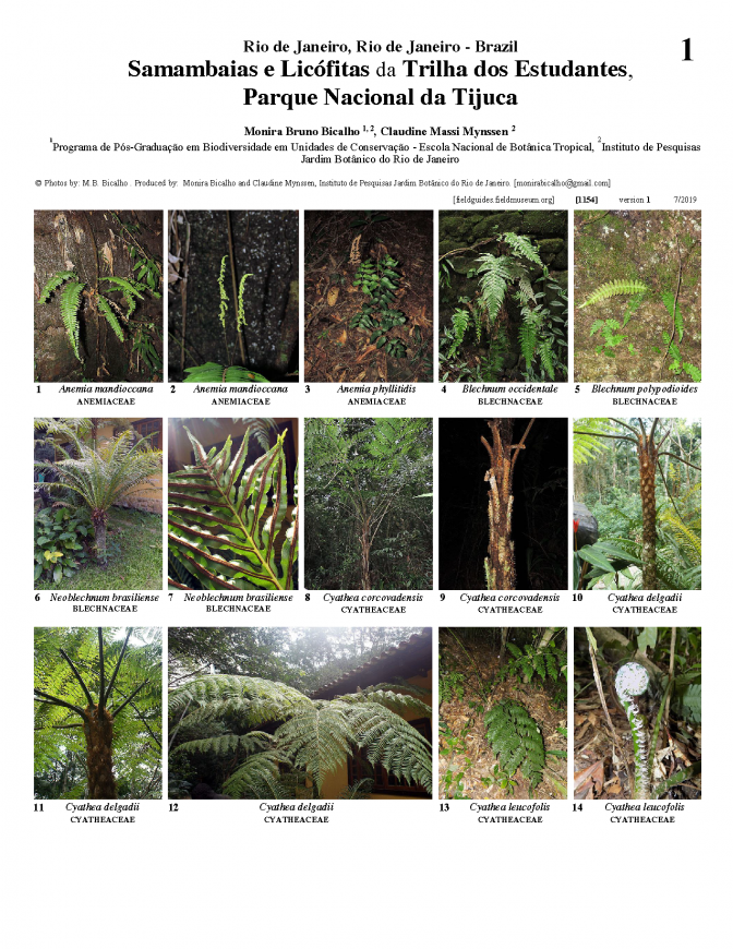 1154_brazil_ferns_lycophytes_of_the_students_trail_tijuca.pdf