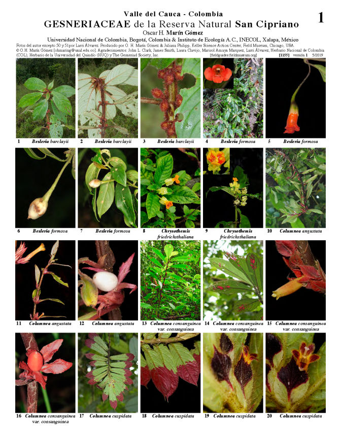 1155_colombia_gesneriaceae_of_san_cipriano_reserve.pdf