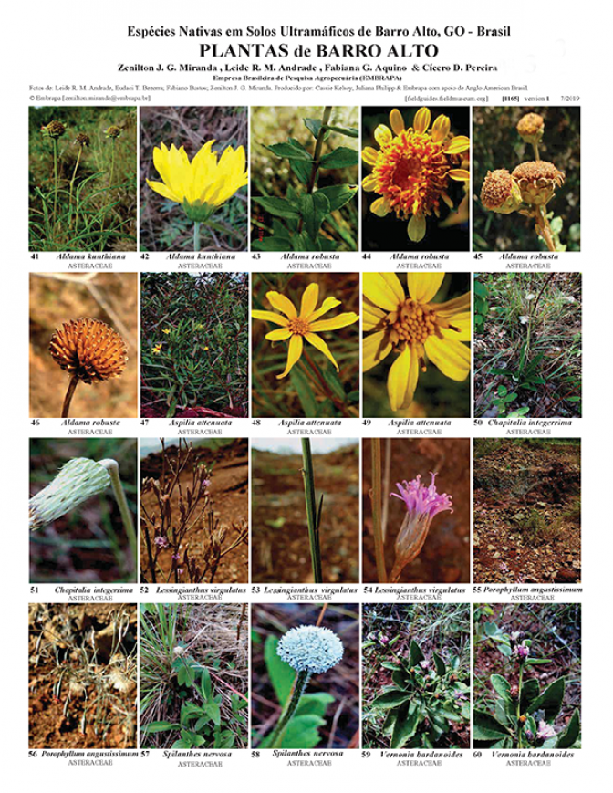 1165_brazil_plants_of_barro_alto_go.pdf