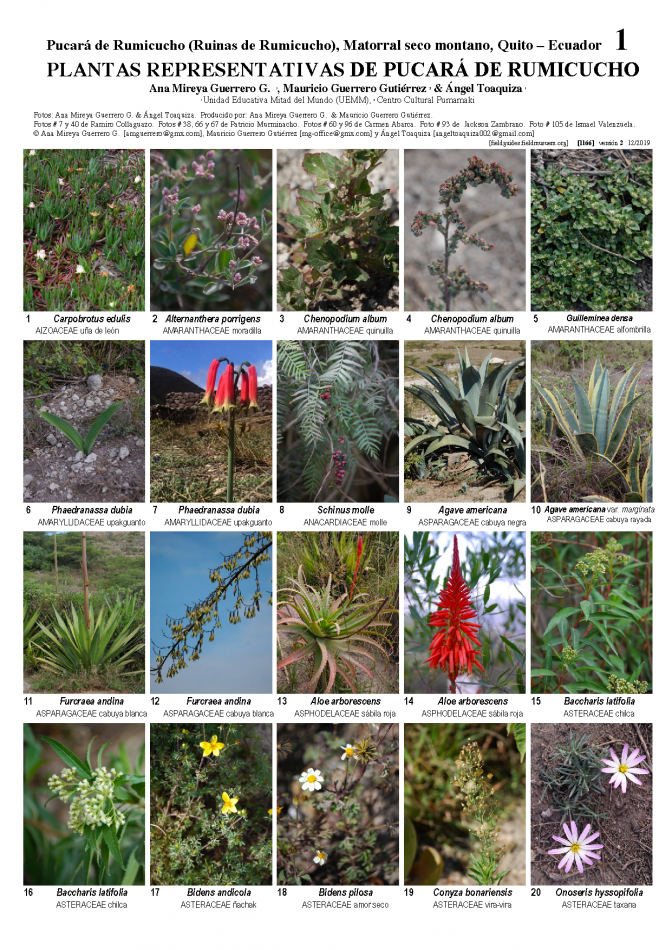 1166_ecuador_representatives_plants_of_pucara.pdf