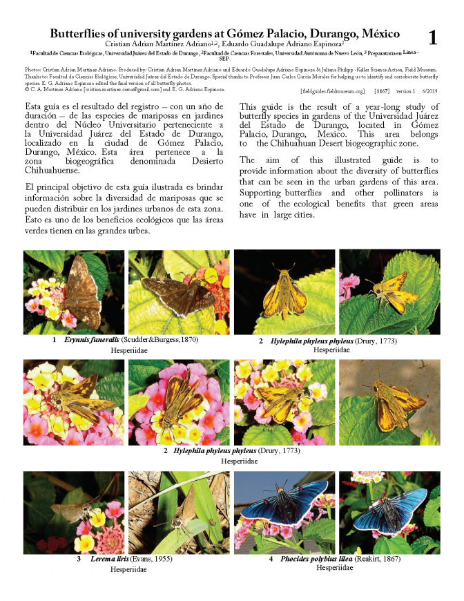 1167_mexico_butterflies_of_gomez_palacio_university.pdf