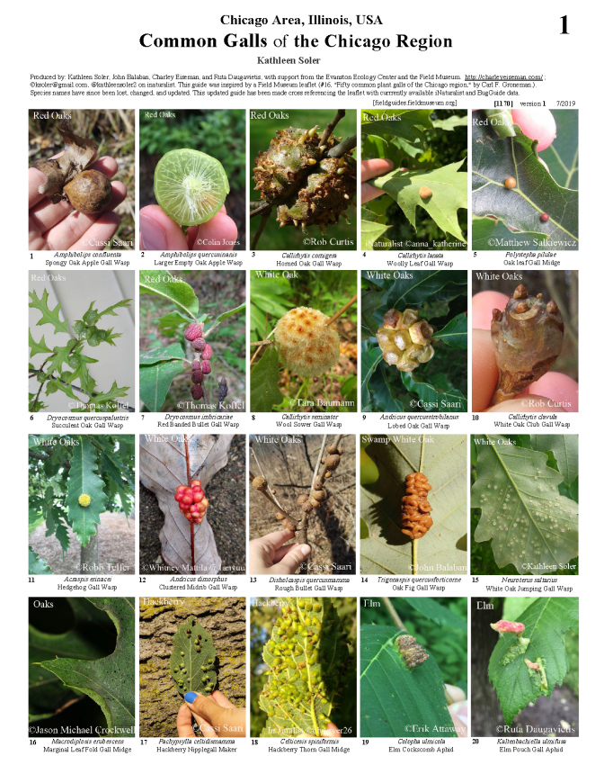 1170_usa_common_galls_of_the_chicago_region.pdf