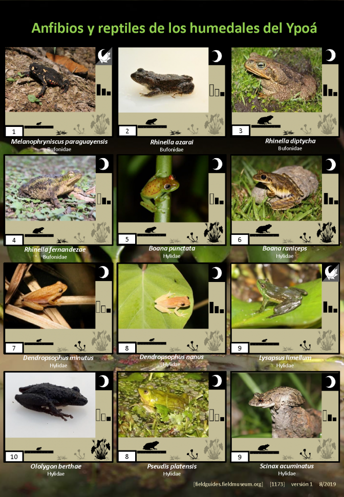 1173_paraguay_amphibians_and_reptiles_of_ypoa.pdf