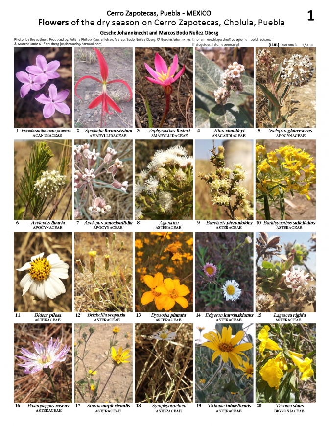 1181_mexico_flowers_of_cerro_zapotecas.pdf