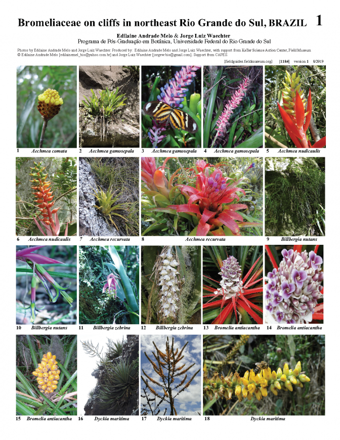 1184_brazil_bromeliaceae_on_cliffs_rio_grande_do_sul.pdf