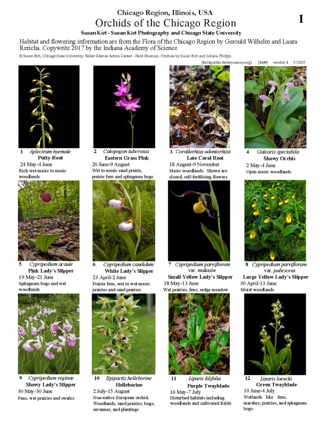 1191_usa_orchids_of_the_chicago_region.pdf