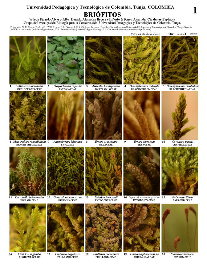 1194_colombia_bryophytes_of_tunja.pdf