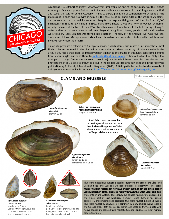 1200_usa_freshwater_mollusks_of_chicago.pdf