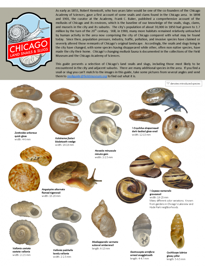 1201_usa_land_snails_and_slugs_of_chicago.pdf