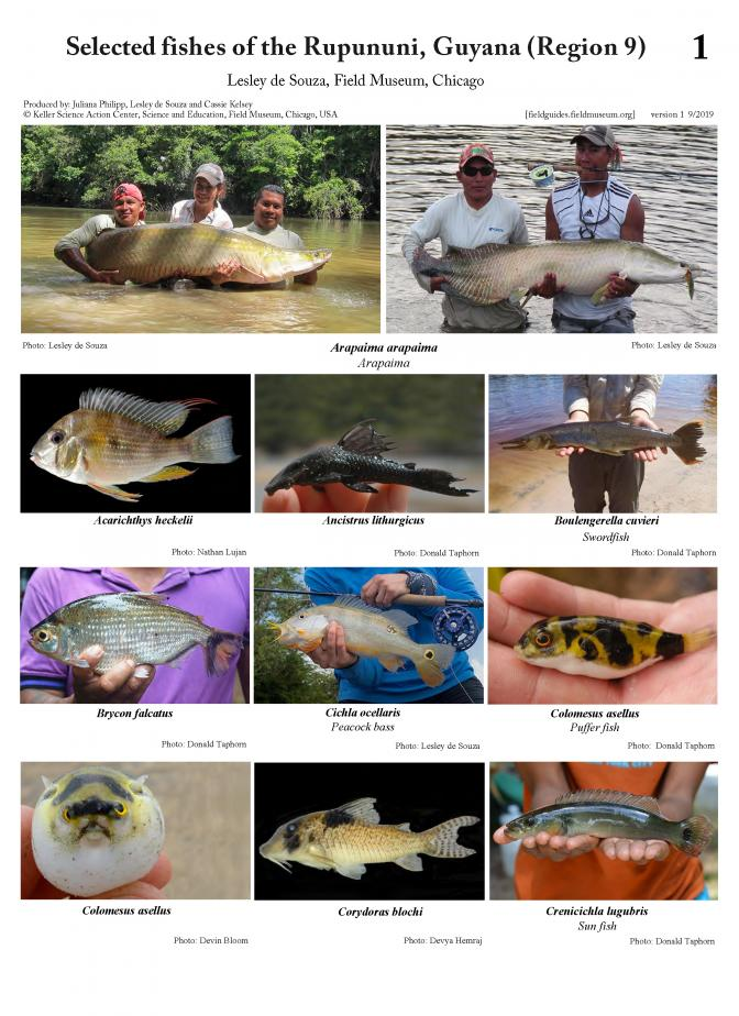1202_guyana_selected_fishes_of_the_rupununi.pdf