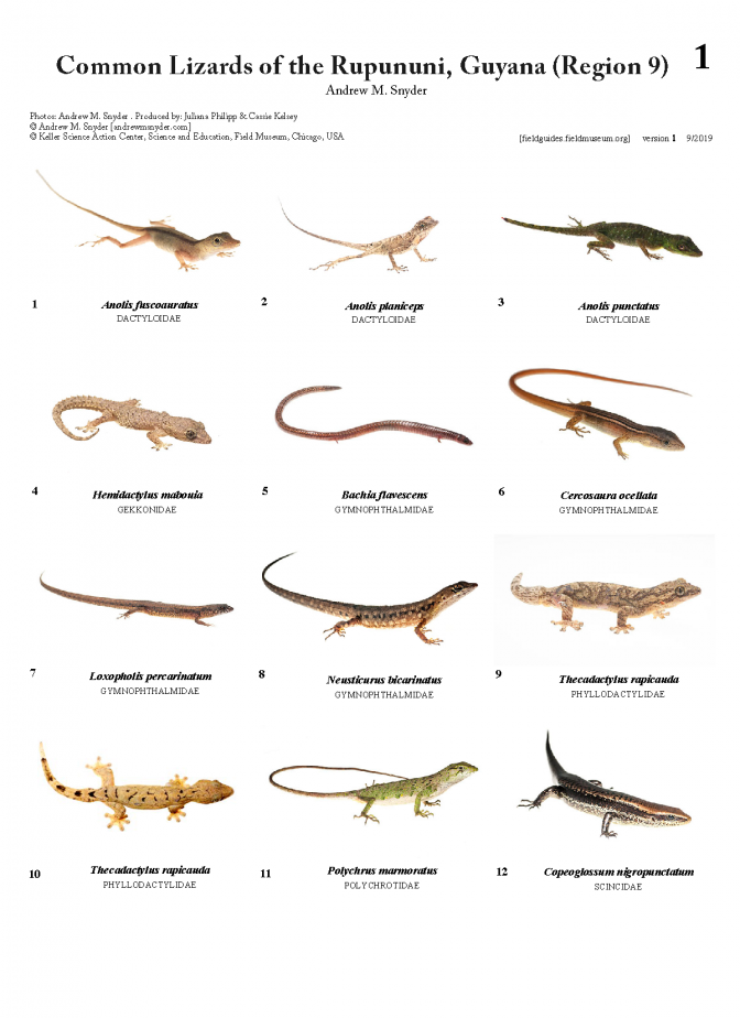 1205_guyana_lizards_of_rupununi.pdf