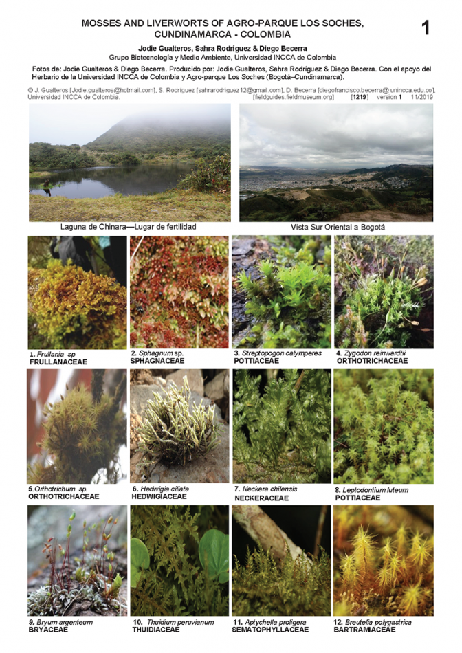 1219_colombia_mosses_and_liverworts_of_los_soles.pdf