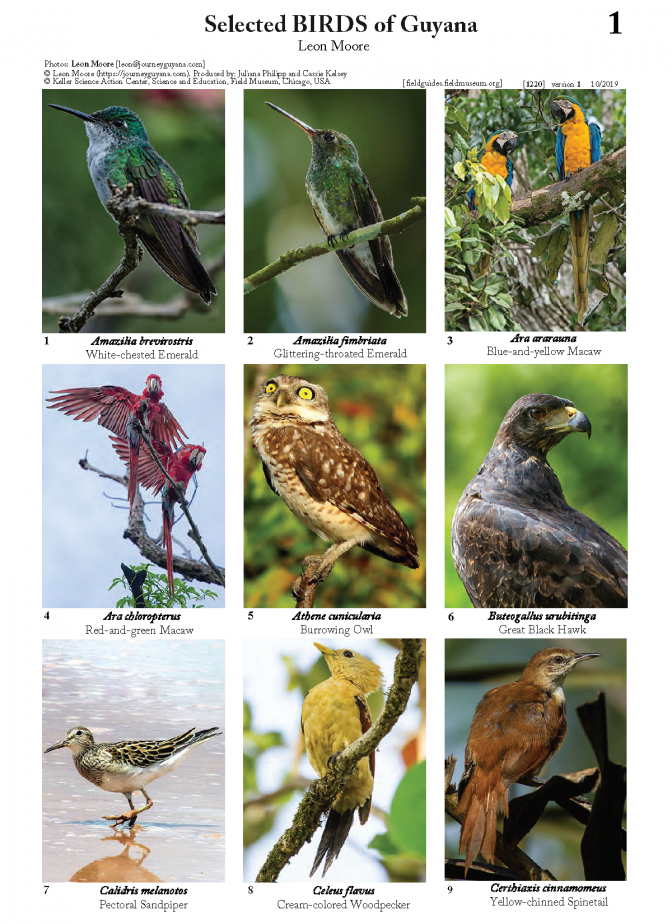 1220_guyana_selected_birds.pdf