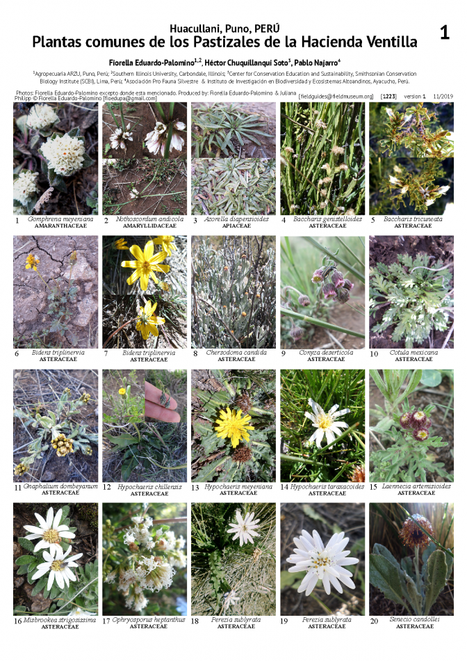1223_peru_common_plants_of_hacienda_ventilla.pdf