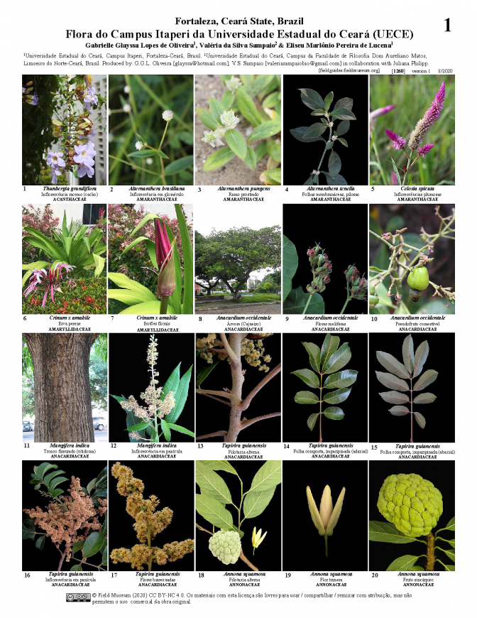 1260_brazil_flora_of_itaperi_university_campus.pdf