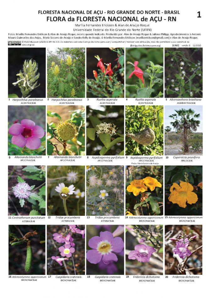 1262_brazil_plants_acu_national_forest.pdf