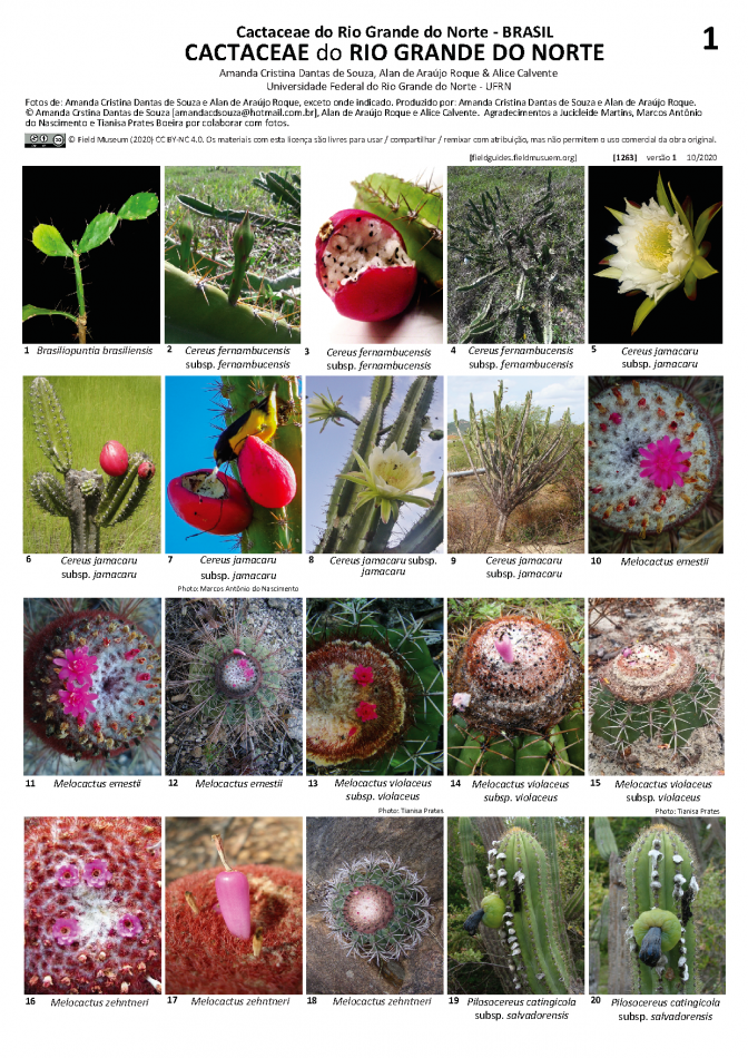 1263_brazil_cactaceae_of_rio_grande_do_norte.pdf