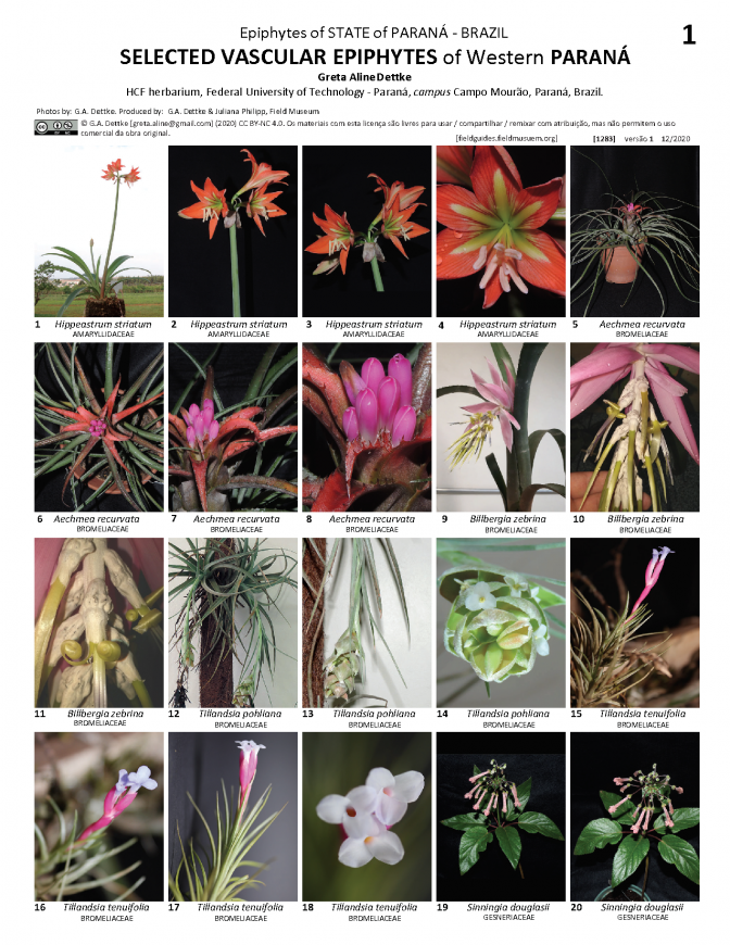 1283_brazil_selected_epiphytes_of_parana.pdf