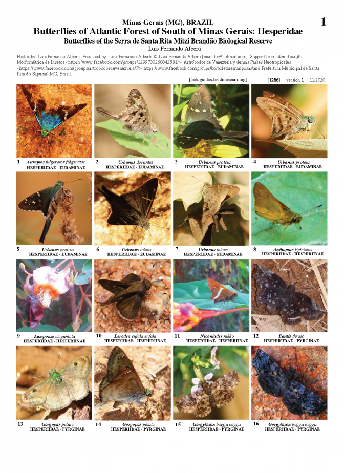 1286_brazil_hesperidae_of_the_serra_de_santa_rita_mitzi_brandao_biological_reserve.pdf