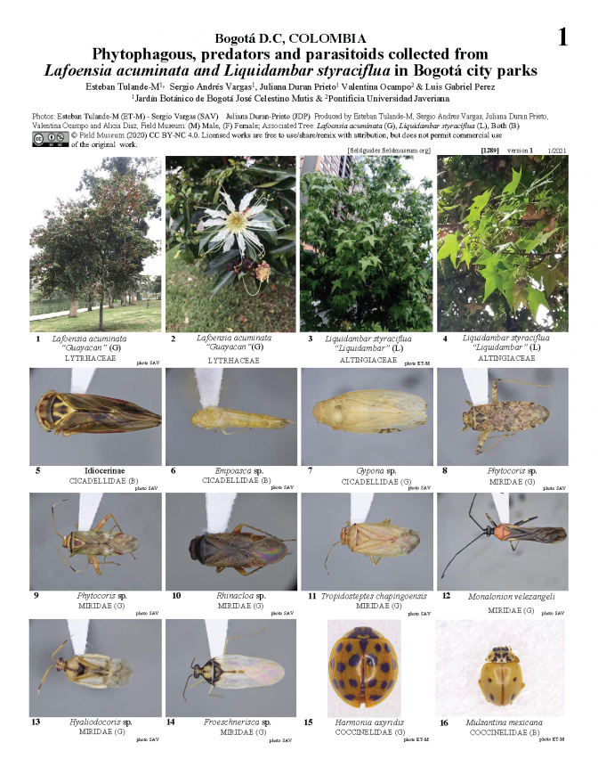 1289_colombia_insects_on_lafoensia_acuminata_liquidambar_styraciflua.pdf