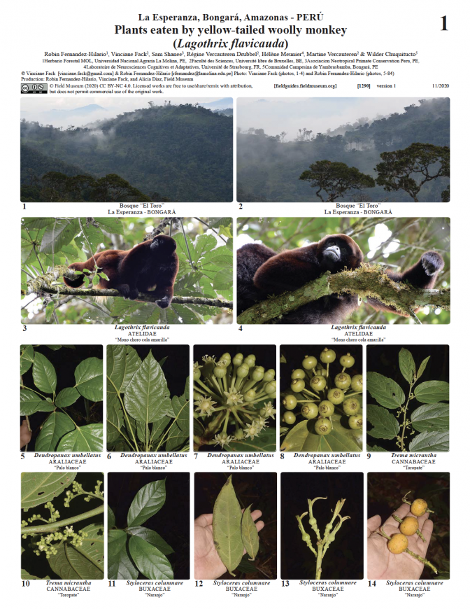 1290_peru_plants_eaten_yellowtailed_wollymonkey.pdf