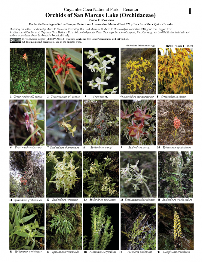 1295_ecuador_orchids_of_san_marcos_lake_1.pdf