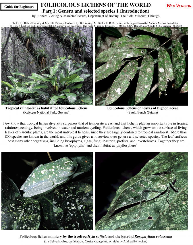 Foliicolous Lichens of the World
