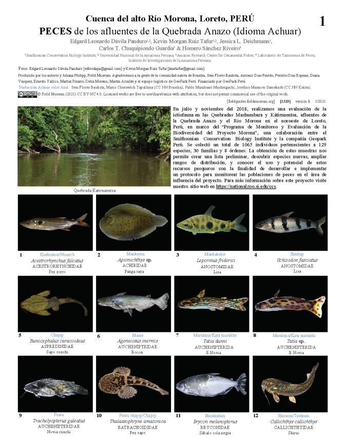 1319_peru_fishes_of_quebrada_anazo_achuar.pdf