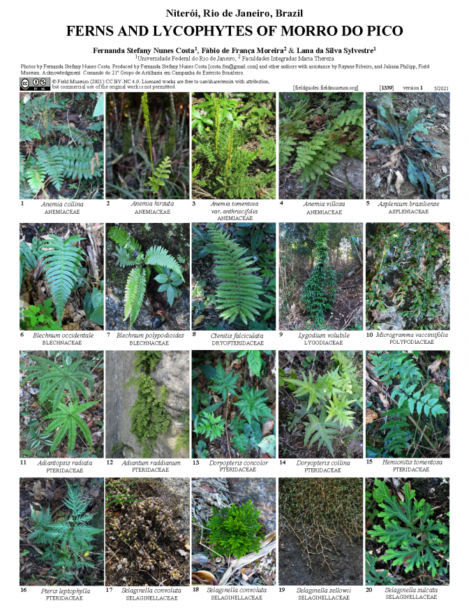 1339_brazil_ferns_lycophytes_of_morro_do_pico.pdf