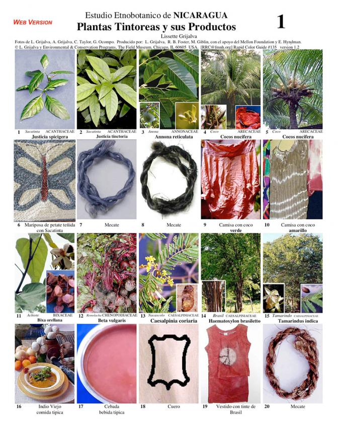 Dye Plants & their Products