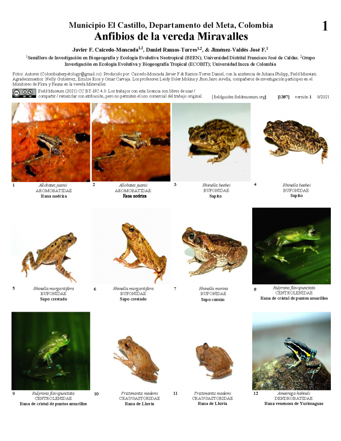 1387_colombia_colombia_amphibians_of_miravalles.pdf