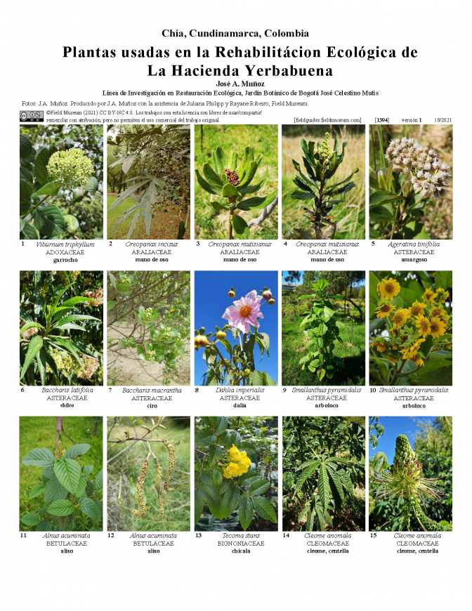 1394_colombia_plants_used_in_the_ecological_rehabilitation_of_yerbabuena.pdf
