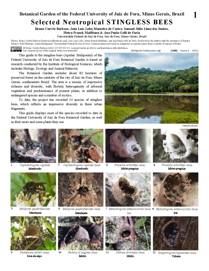 1400_brazil_selected_neotropical_stingless_bees.pdf