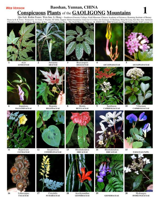 Yunnan -- Baoshan, Conspicuous Plants of the Gaoligong Mountains