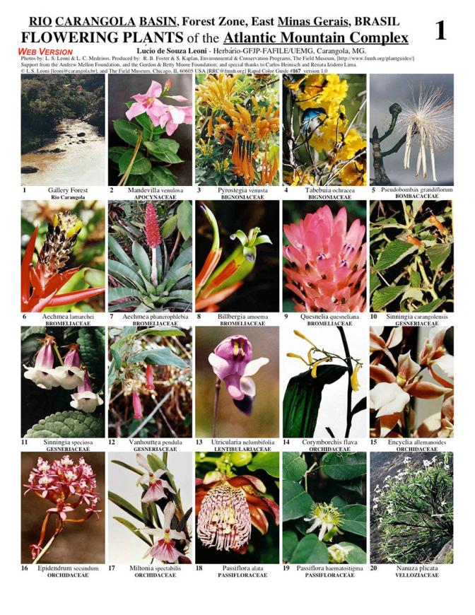 Minas Gerais -- Atlantic Forest - Flowering Plants