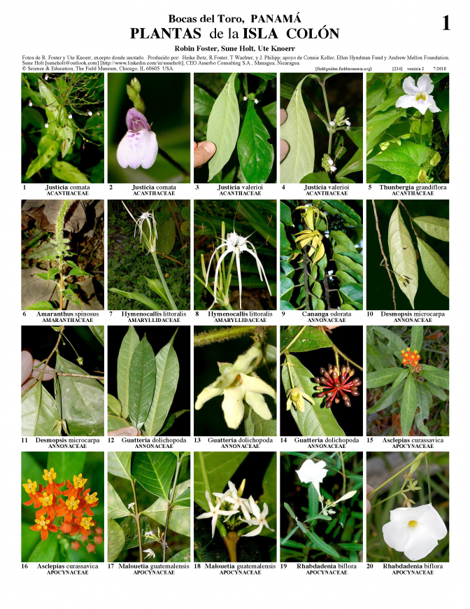 234_panama_plants_of_isla_colon.pdf