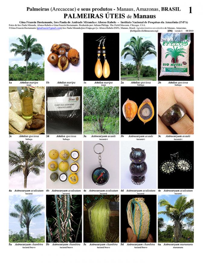 276_brazil_useful_plants_of_manaus.pdf