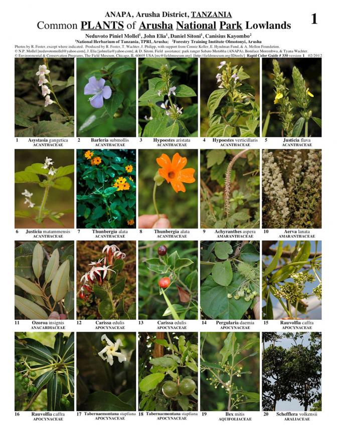 Arusha plants of arusha national park field guides for Plantas ornamentales para parques